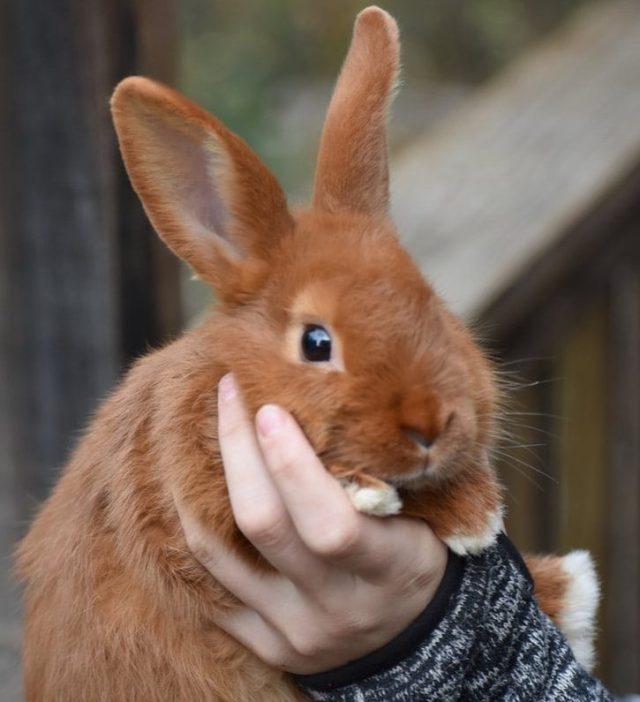 Membelai dan menggendong kelinci menjadi kegiatan yang menyenangkan.