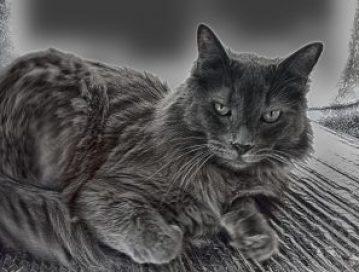 odin the cat