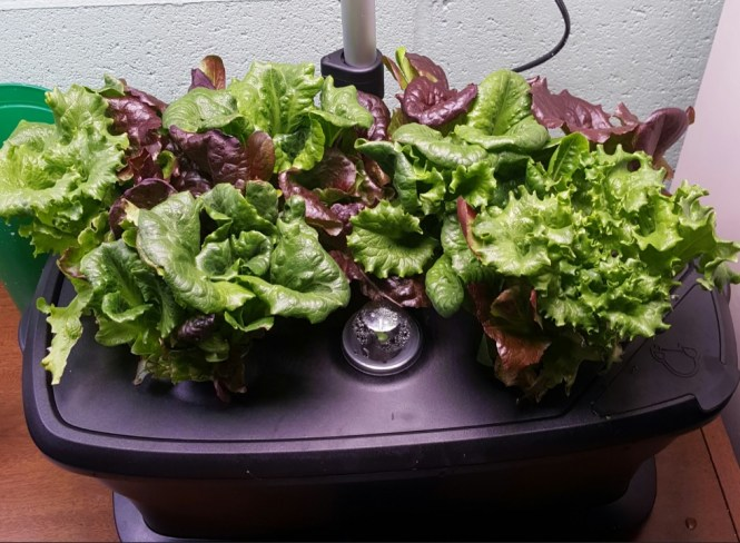 hydroponics aerogarden extra LED