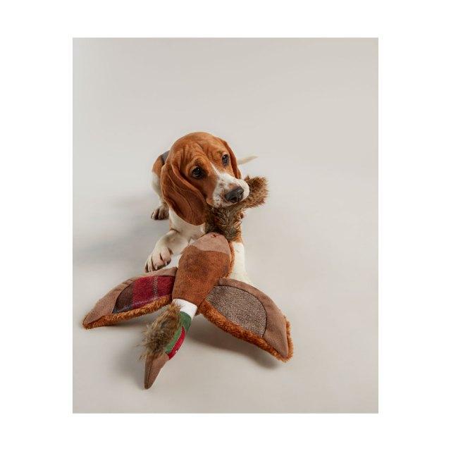 mänguasi koerale Faasan