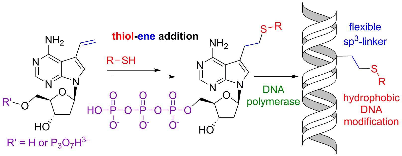 hight resolution of chemical biology of base modified nucleic acids