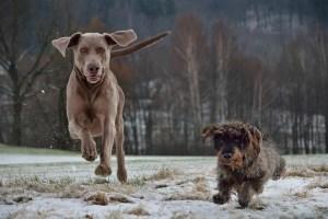 Aufwandsentschädigung für brauchbare Jagdhunde