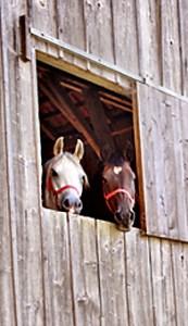 Zwei verliebte Hochzeitspferde am Fenster