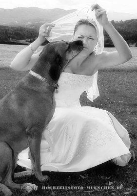 Hochzeitsreportage 09: Hund küsst die Braut