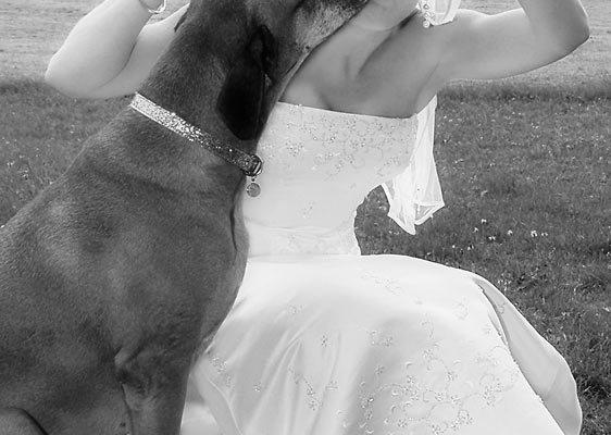 Hochzeit-Fotoreportage: Hundekuss
