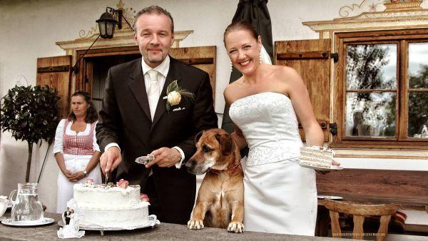 Hochzeitsreportage 15: Hund bewundert die Hochzeitstorte