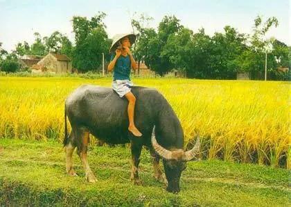 Sáo trúc Việt Nam