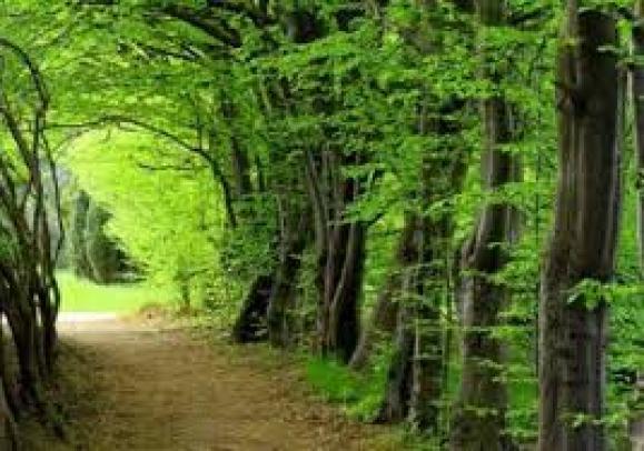 Cảm nhận vẻ đẹp cây xà nu trong các đoạn trích