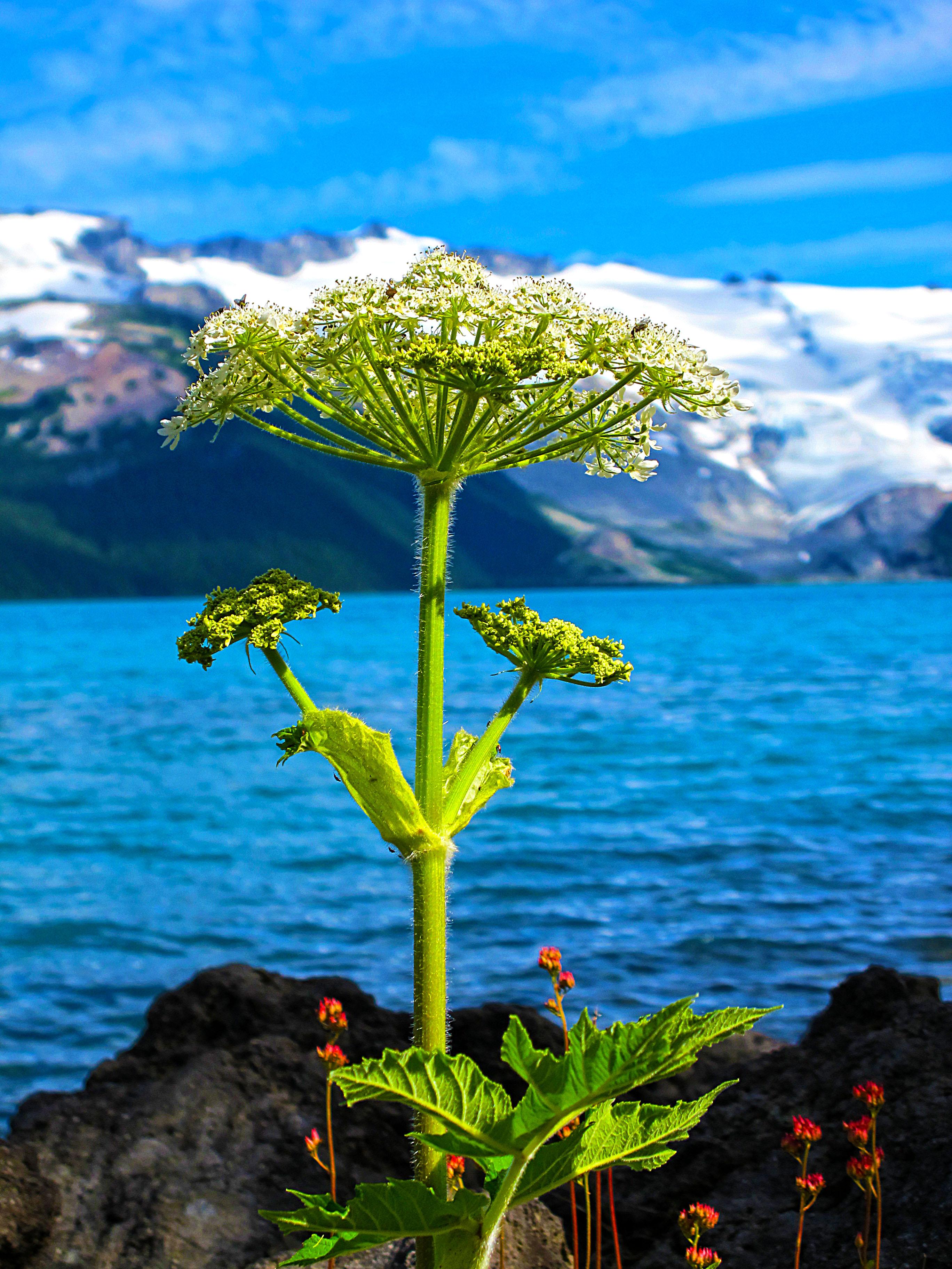 Colourful Nature Hoda Photography