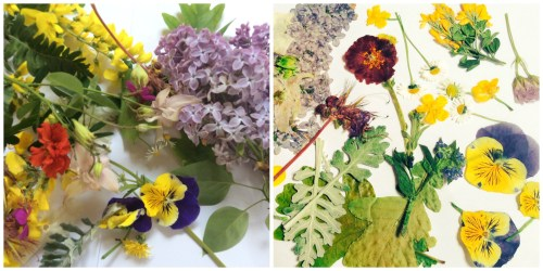 Dried Flower Craft Ideas