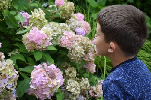 Creating a garden wildlife sanctuary project with your kids