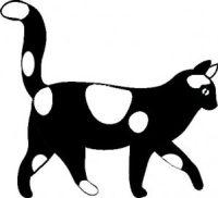 black-white-cat-walking