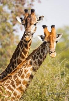 2011_07_23_Kruger_National_Park_0103