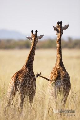 2011_07_25_Kruger_National_Park_0665