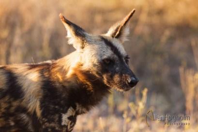 2011_08_02_Kruger_National_Park_2904