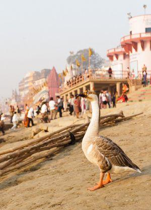 2011_03_15_Varanasi_276.jpg