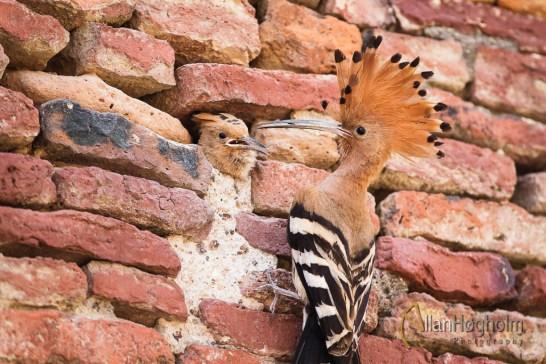 2011_03_16_Agra_336