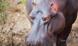 2011_07_31_Kruger_National_Park_2187