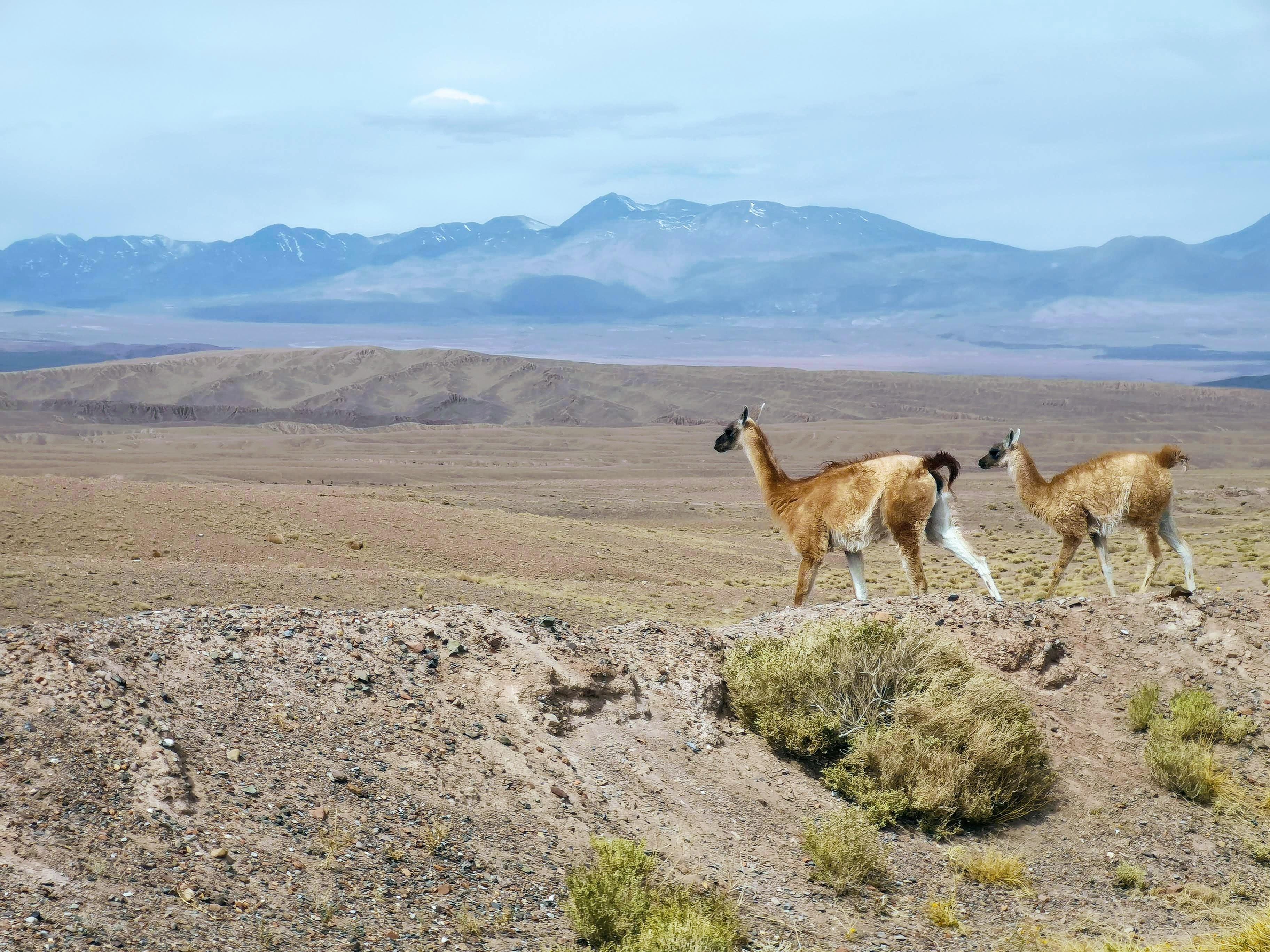 Akklimatisation in den Anden