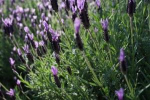 7 libros de aromaterapia