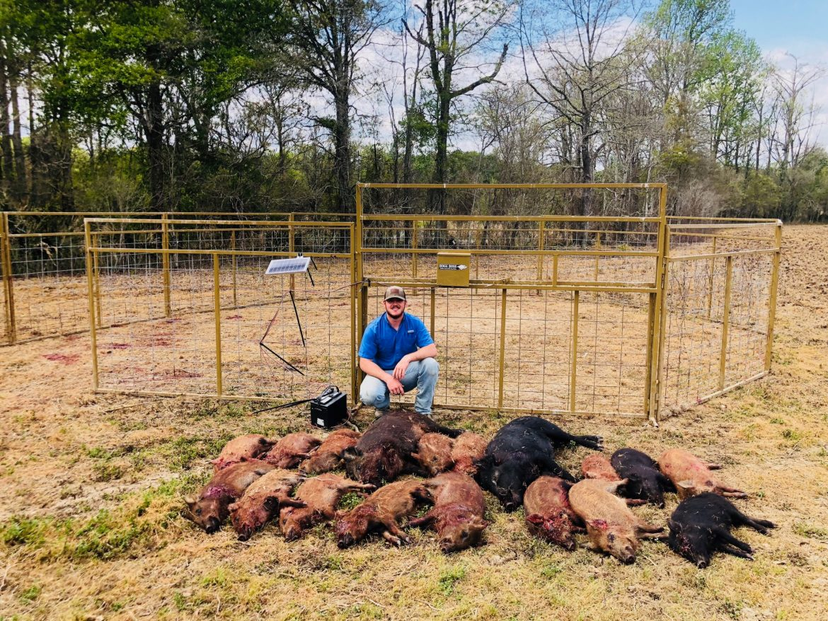 Feral Hog Management
