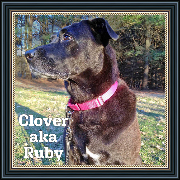 Clover aka Ruby Adoptable