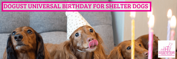 DOGust Universal Birthday for Shelter Dogs