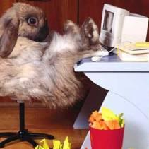 rabbit desk
