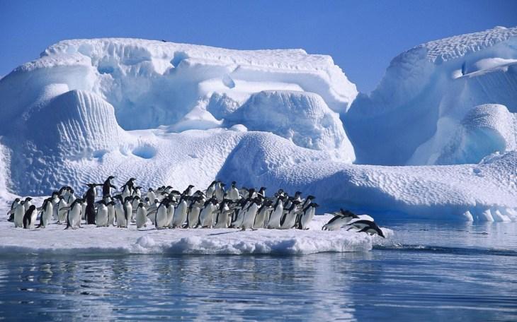 antarktika balayı