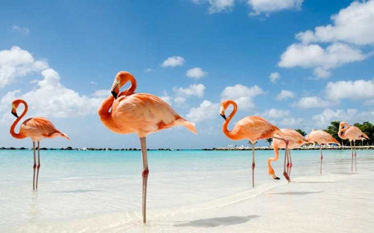 flamingo-beach-aruba-FLAM0517
