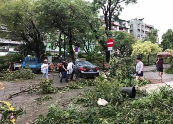 Queda de árvores no Largo Luís de Camões. Foto: Hoje Macau