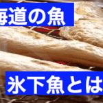 北海道で釣れる魚氷下魚とは?読み方は?食べ方や時期は?味は?