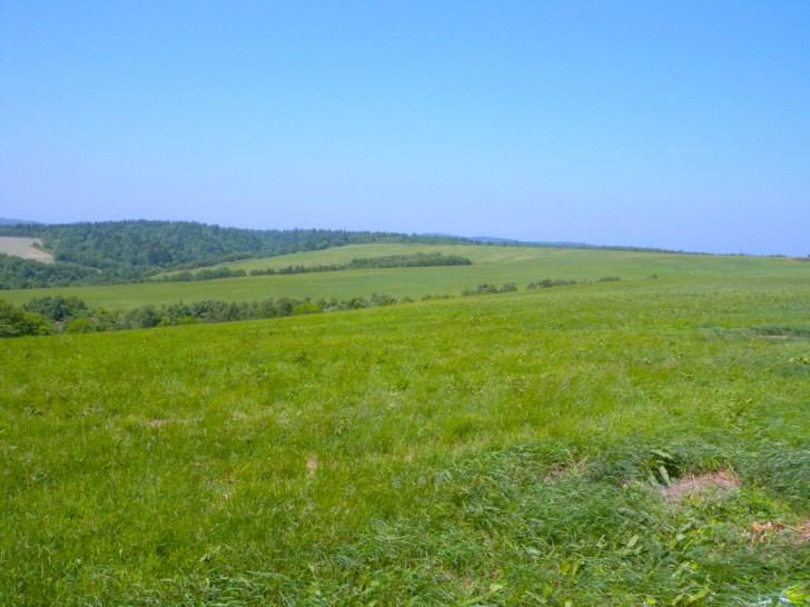 クローバーの丘