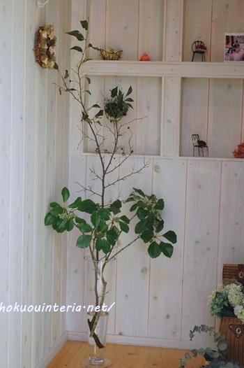 雑木の枝でインテリアグリーン
