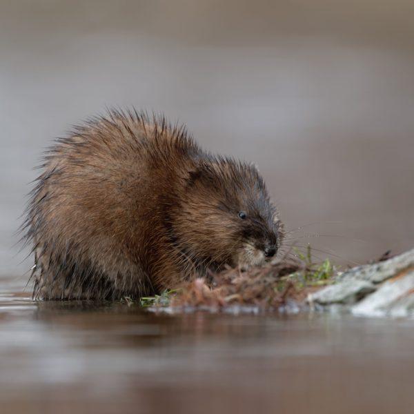 Inhabitant of the wetland