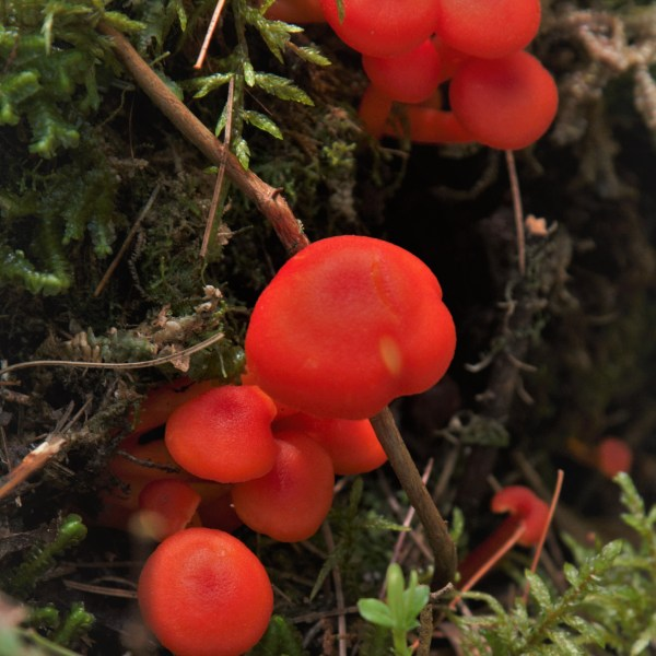 Mushrooms of Dumoine River