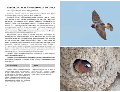 Birds2-4