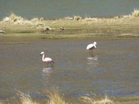 Flamingos auf 4'000m Höhe?!