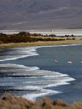 Salz, Wasser & Flamingos (Salar de Surire)