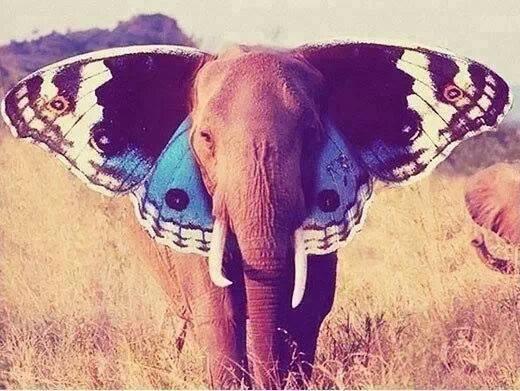 elefante-mariposa