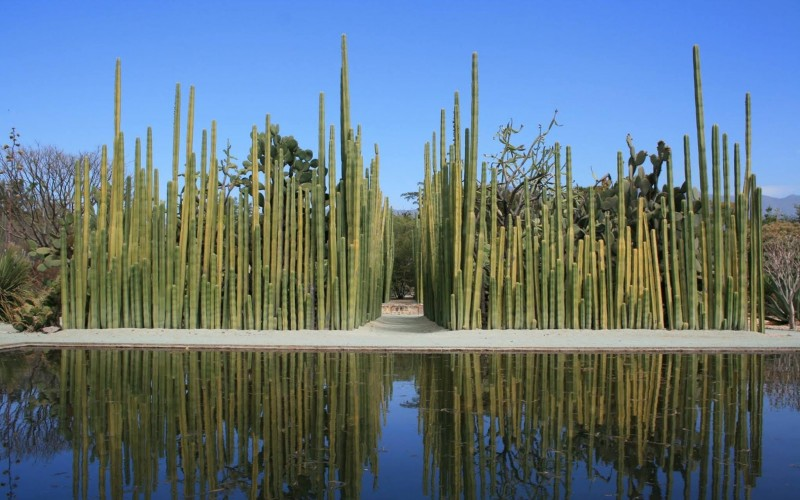 Jardín-Etnobotánico- mosaico-natural-de-oaxaca