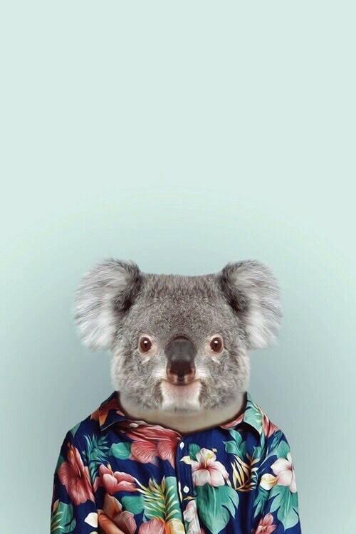 fondo-de-pantalla-de-koala