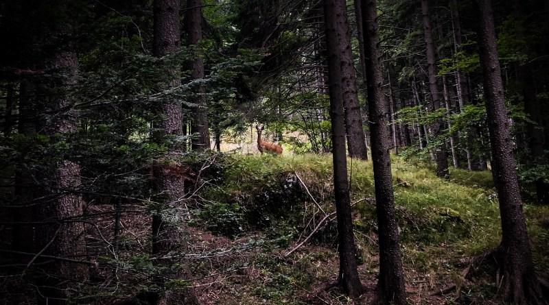 A Hohe-Wand misztikus szarvasai