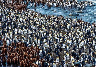 Pingvinszartól téptek be a tudósok