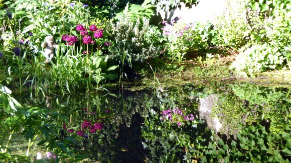 Mossgrove pond (22 may 2016)
