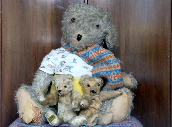 john-and-marys-taylor-teddy-bears-rescued-from-dallas-skip-26-oct-2016-2