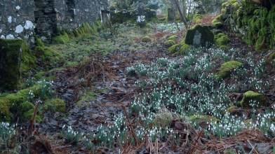 Kilneuair, South Loch Awe side - Monday 11 February 2019 (17)