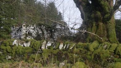 Kilneuair, South Loch Awe side - Monday 11 February 2019 (3)