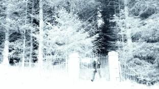 Whitehaugh Mausoleum - Thursday 2nd January 2020 (1)