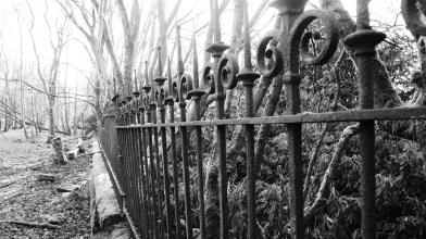 Peter Gordon visits Gartshore gardens - Monday 12 April 2021 (12)